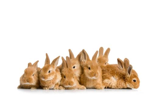 rabbits-cute-group-of-land-13269